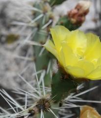 crop flower