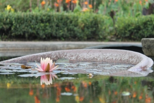 I'm trying to become this blossom rising from the muck :-)