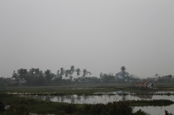 Rice paddy in fog, number five million