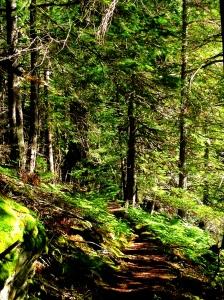 A wider path
