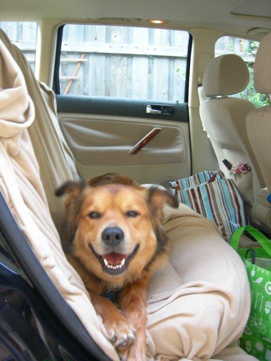 spanky car backseat